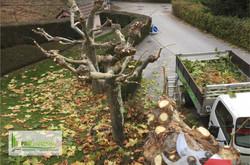Felco___Taille_dea_arbres_Platanes_Sierr
