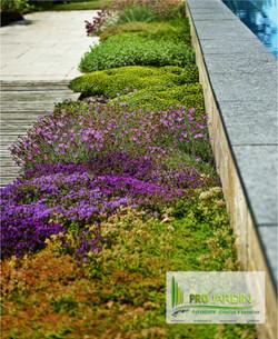 Vivaces tapissantes PROjardin Paysagiste creations & enretiensn Espace vert Jardins Contrats annuel