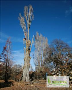 grand_arbre_dangerous_Tonte_gazon_Fauchages_Scarification_Taille_Elagages_Abattage_arbres_Nettoyage_