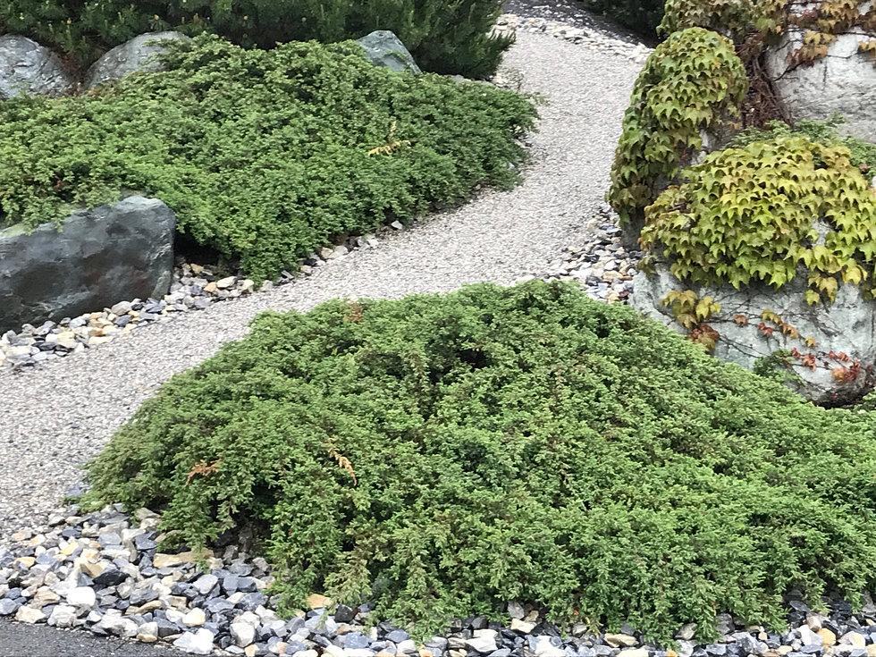 Pro Jardin - Paysagiste Valais Sierre - Projardin.ch - Accueil