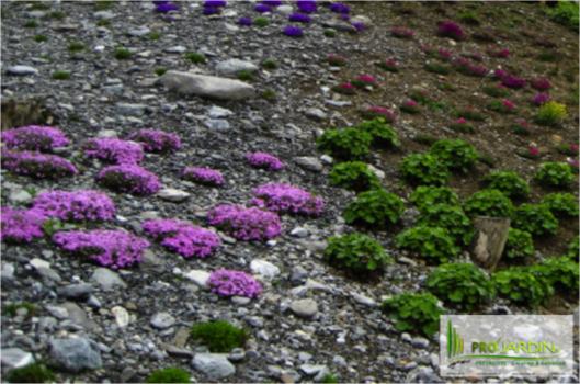 PROjardin Paysagiste creations & enretiensn Espace vert Jardins Valais plantes tapissantes couvre so