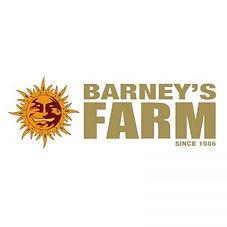 Barneys-Farm-Horizontal-Logo-square-300x