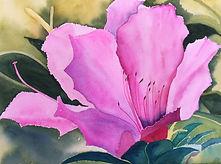 bliek_fran_pretty in pink_22x28f_waterco