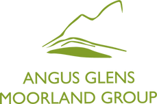 AGMG Logo - NEW Green.png