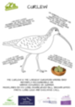 curlew colouring in agmg.jpg
