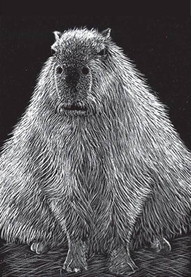 capibara (Hydrochoerus hydrochaeris)