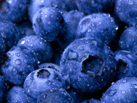 Wild about Wild Blueberries!