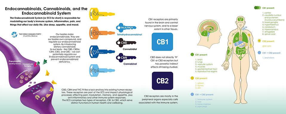 The Farm Cannabis Party Endocannabinoid System