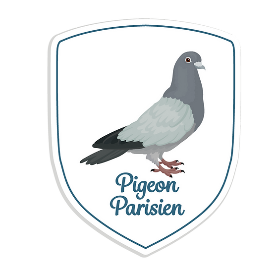 PIGEON PARISIEN