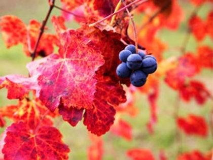 Pré-vente Flash Parfum pour bougie Vigne rouge 1kg