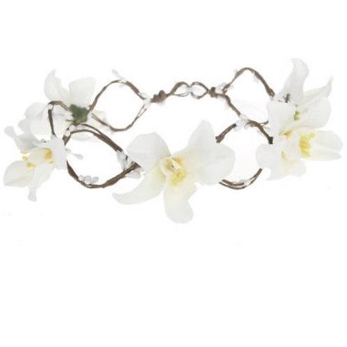 Orchids Crown