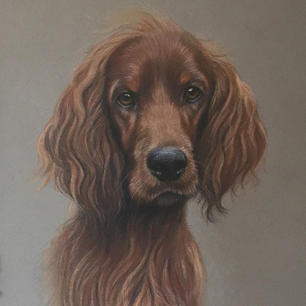'Riley' Irish Red Setter. Completed in O