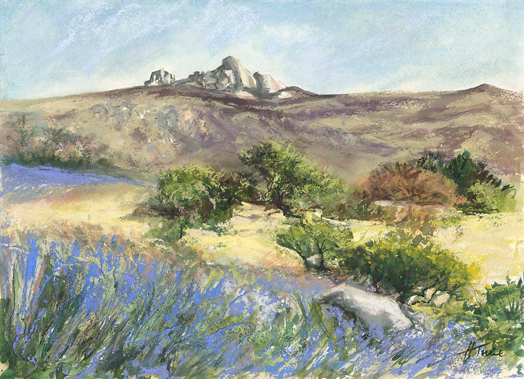 Bluebells Over Haytor