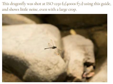 dragonfly hong kong at ISO 1250