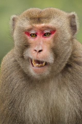 beacon hill monkeys jan 2011 3.jpg