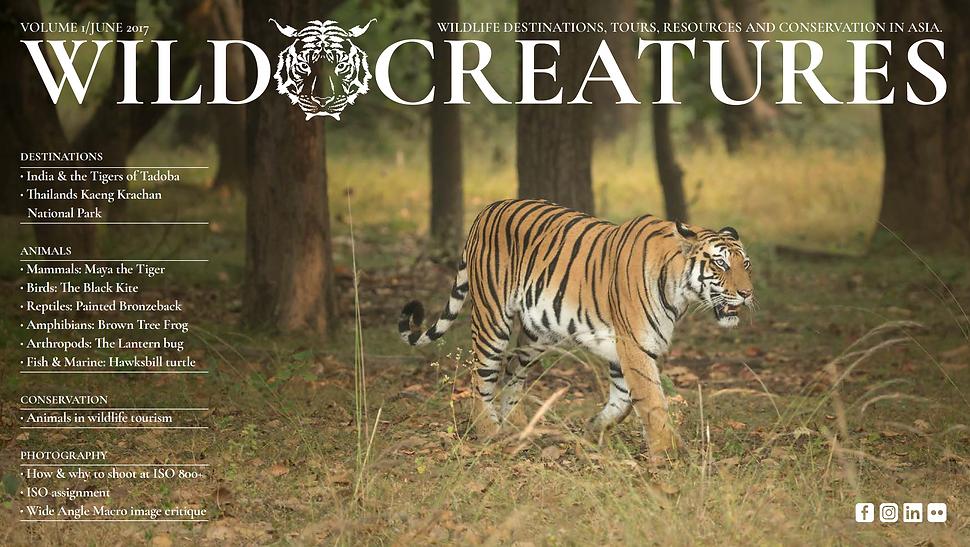 wild creatures magazine