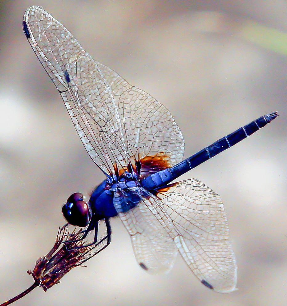 aaadragonflyblog-7.jpg