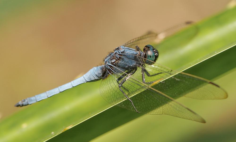 aaadragonflyblog-3.jpg