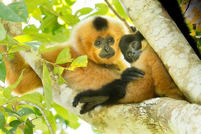 monkey, monkey baby, tree, thailand