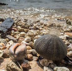 beaches and shore shells