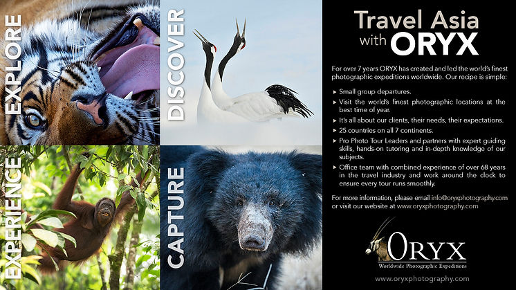 travel wth asia oryx
