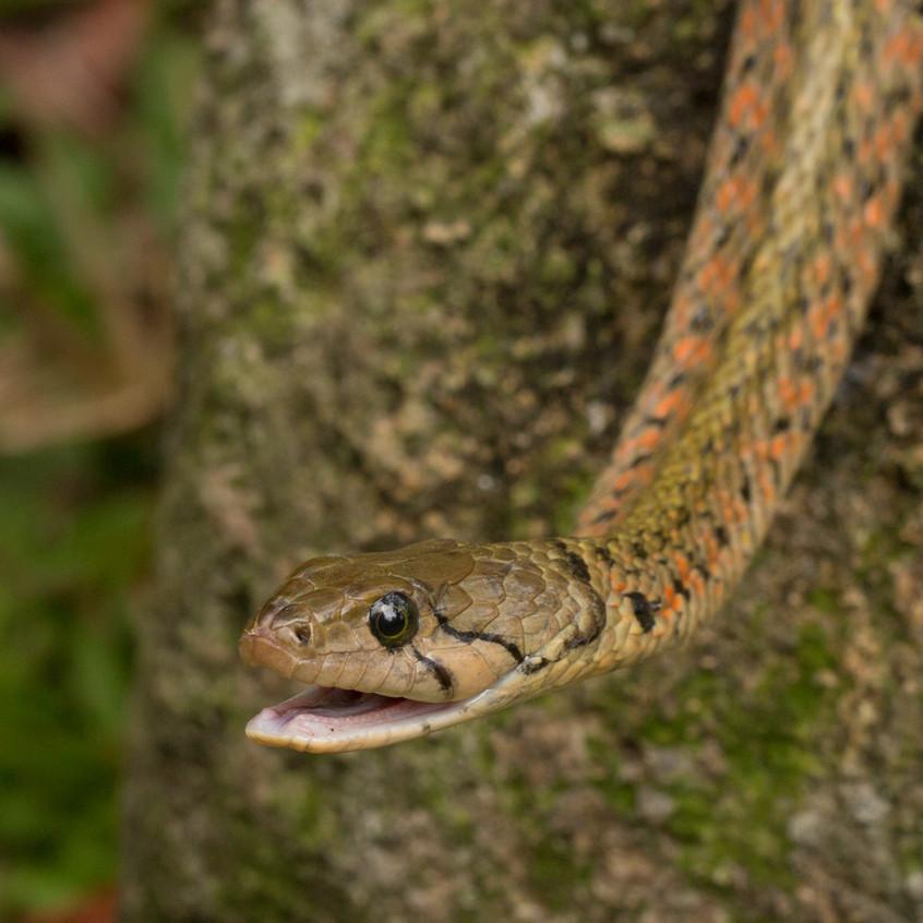 Snakes October19102018-4487
