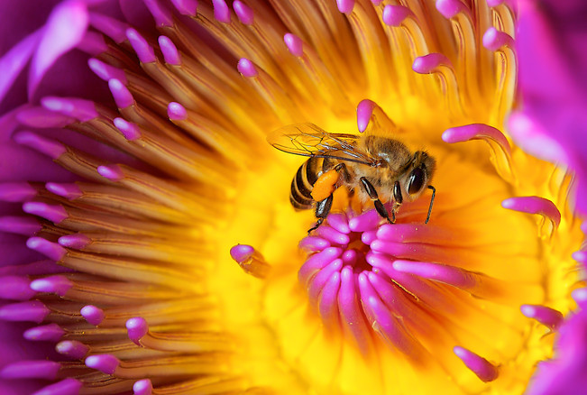 Bee hoping for some nectar