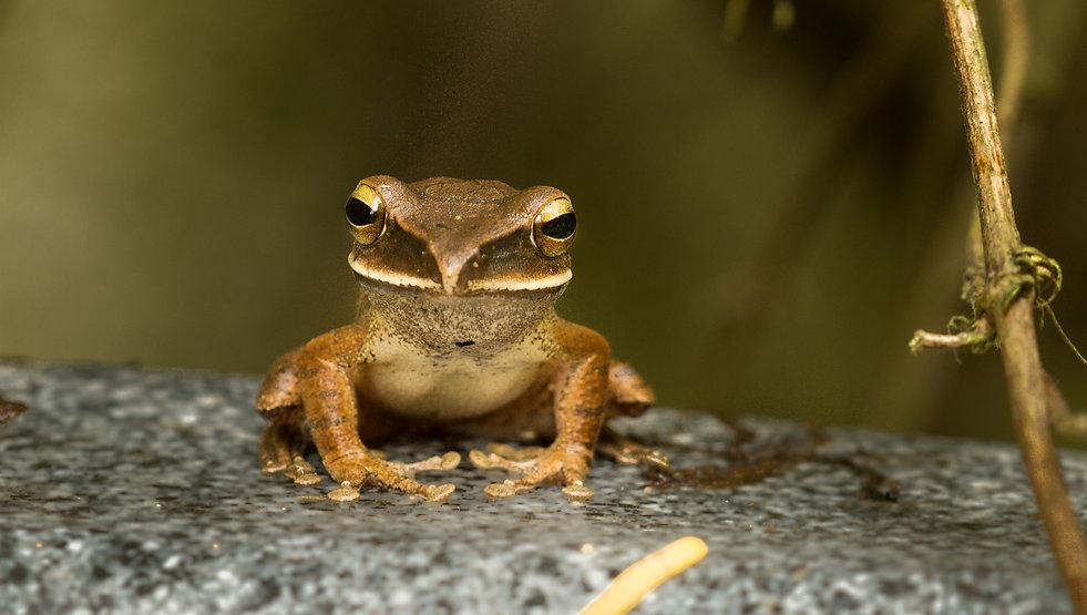 tree frog hong kong