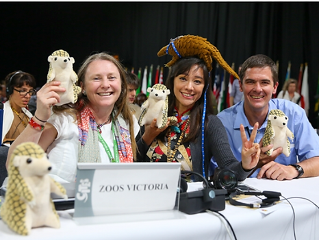 CITES conference, sharon kwok, pangolin toy