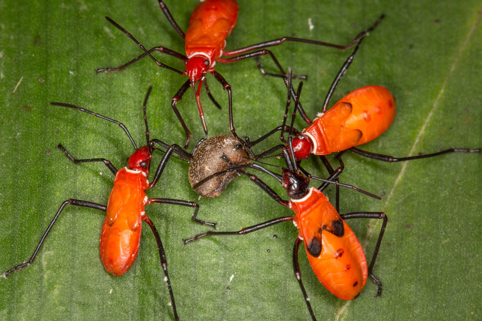 All bugs are insects, but not all insects are bugs...true or false?