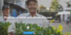 eco asia, search engine, plant trees