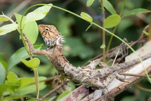 Bonus post on a changeable lizard today....