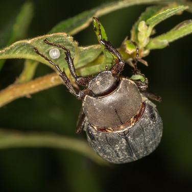 June Beetle.j