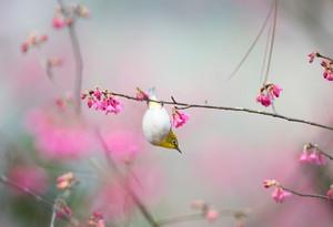 A small bird