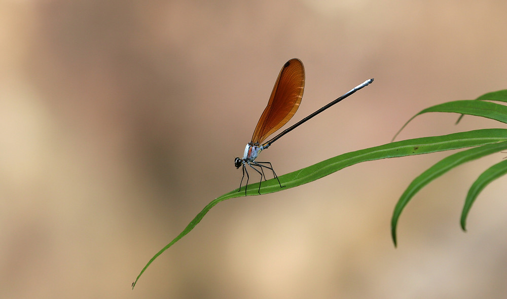 aaadragonflyblog-4.jpg