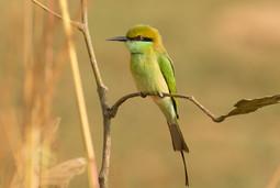 Bird perching on a twig