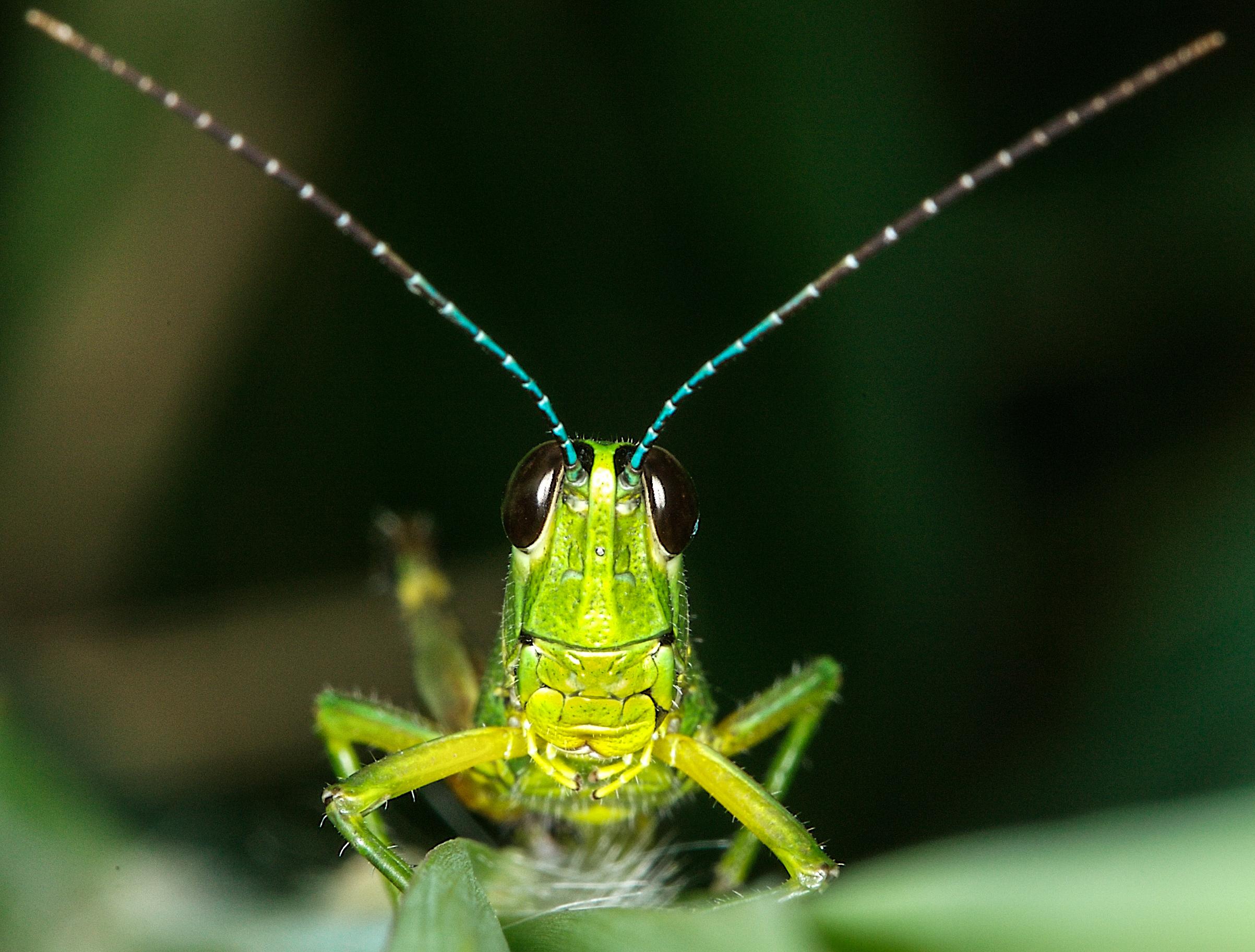 Grasshopper selfie