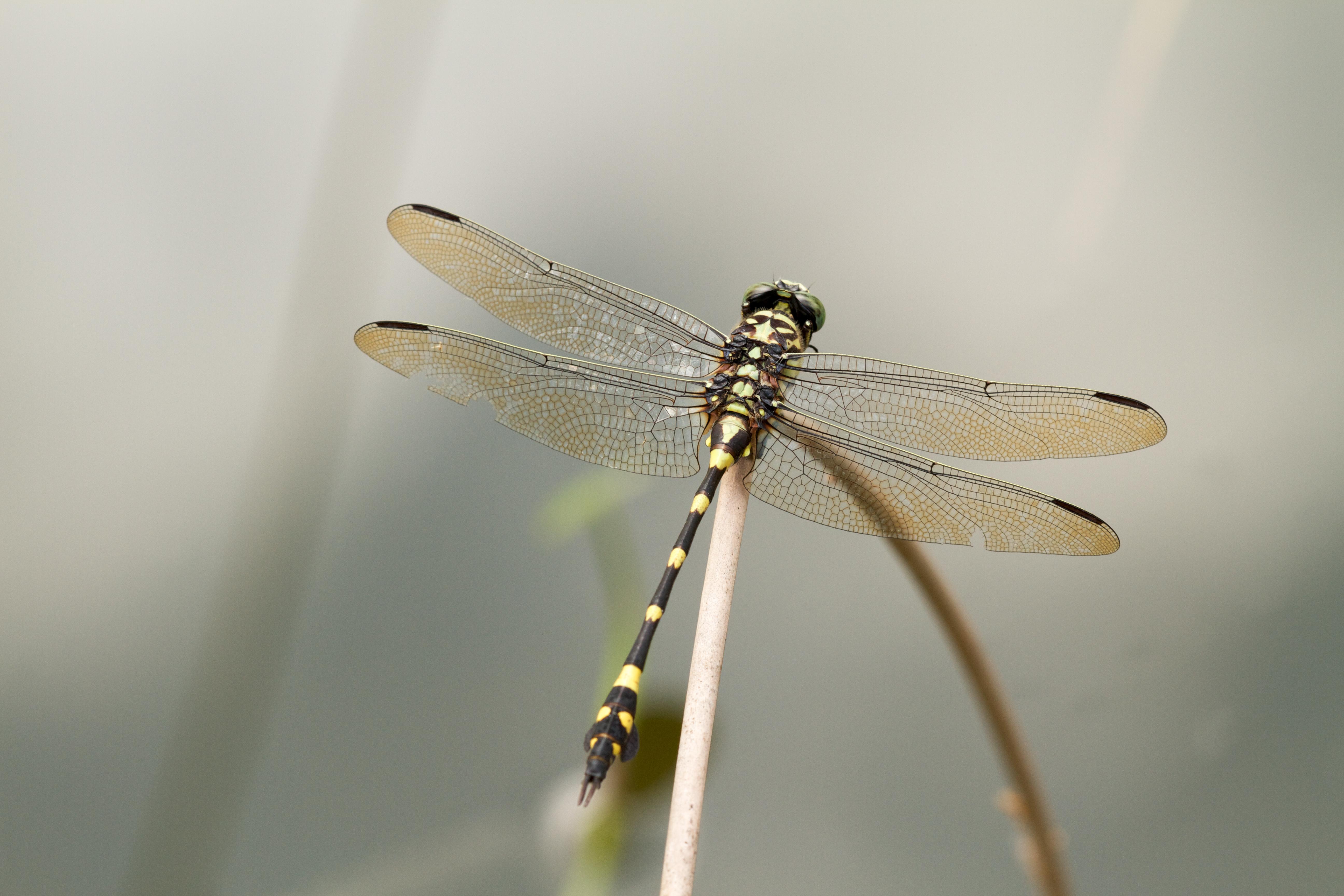 aaadragonflyblog-20.jpg