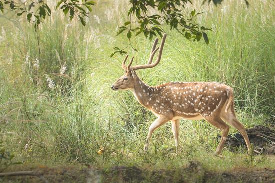 Deer strolling in the park