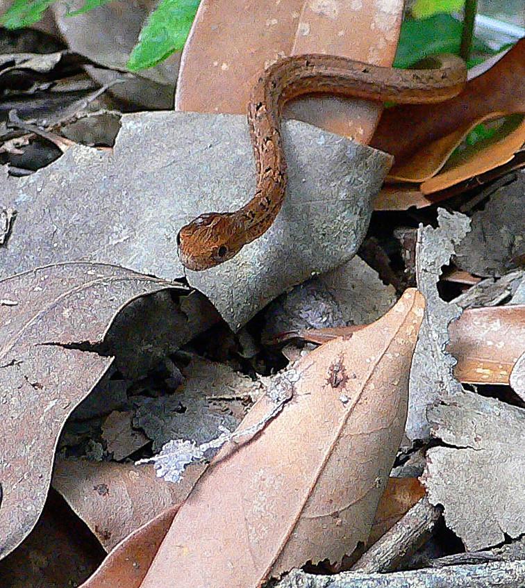 Snakes October19102018-82