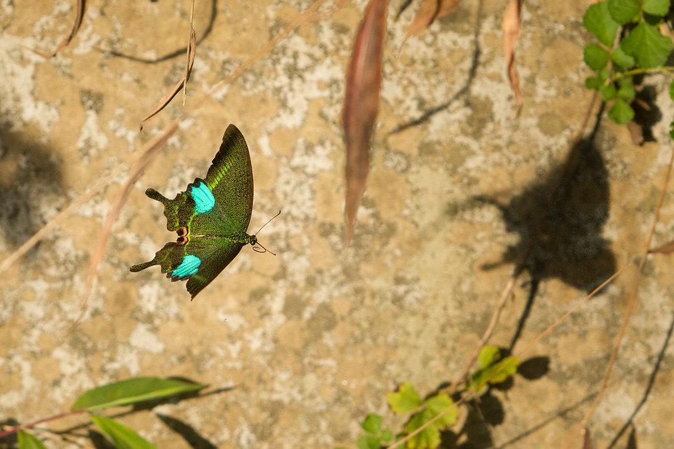butterfly hong kong