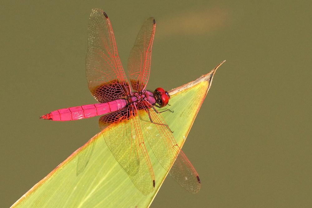 aaadragonflyblog-25.jpg