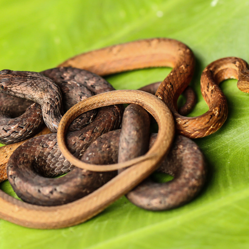 Snakes October19102018-7998