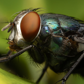 A close up of a fly.