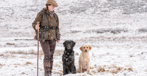 Working Labrador's Aila and Laggan - Auchentore Gundogs