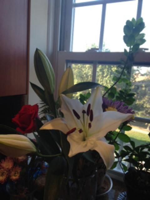 one stargazer lily