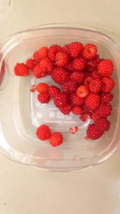 fresh, raspberries, fresh raspberries