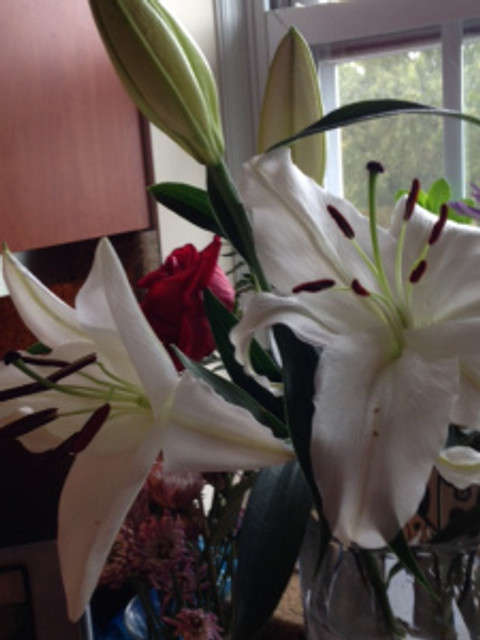 2 stargazer lilies