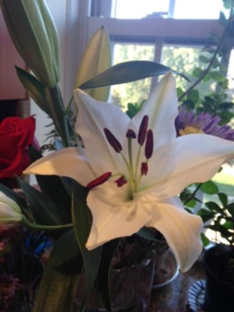 stargazer lilies2