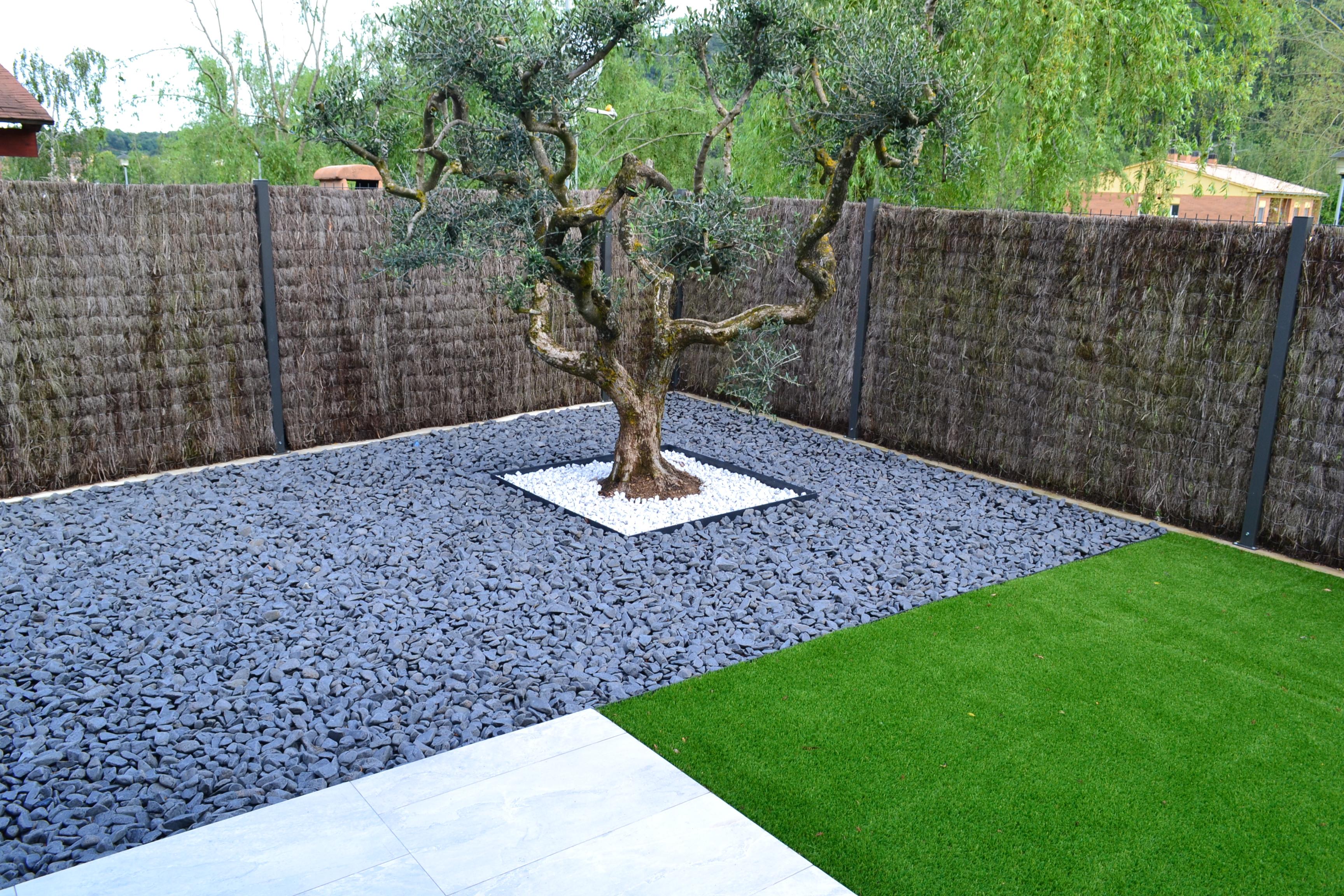 Olivera bonsai a Besalú